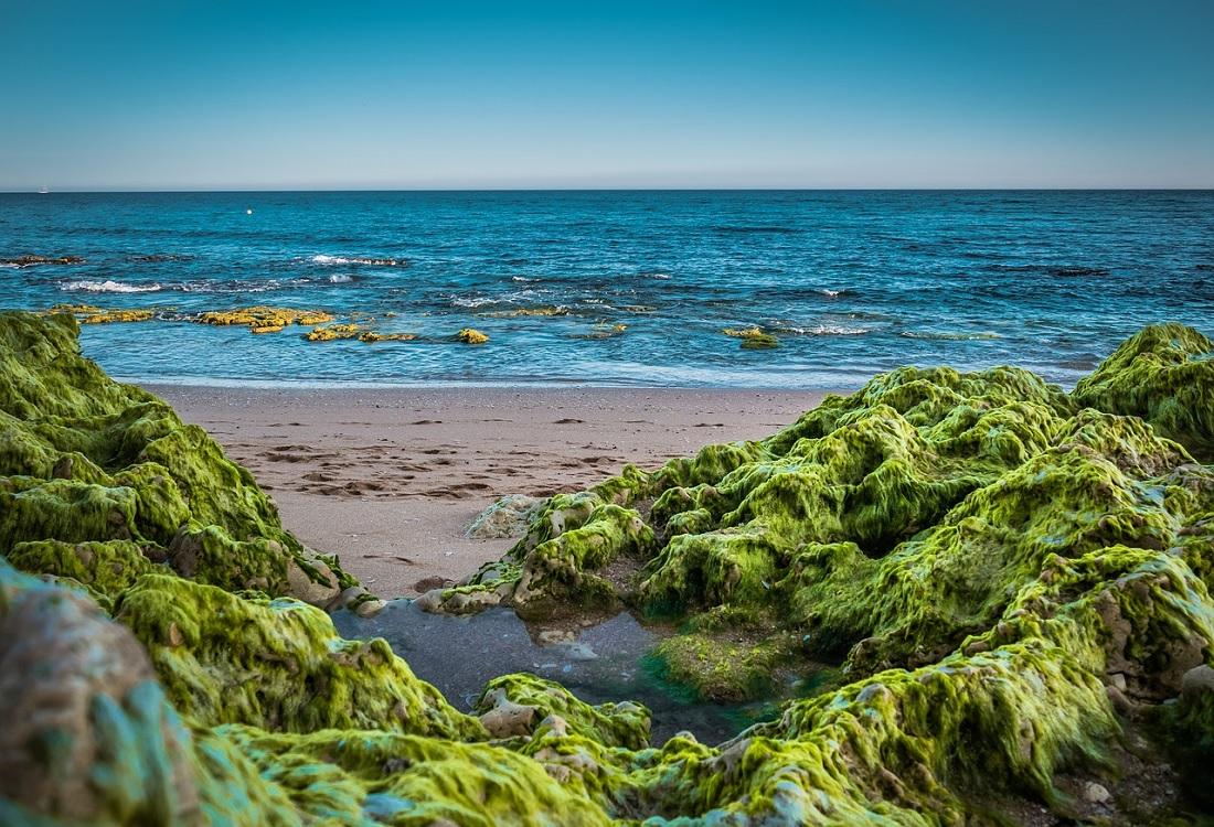 Onderzoek naar zeewier tegen Alzheimer