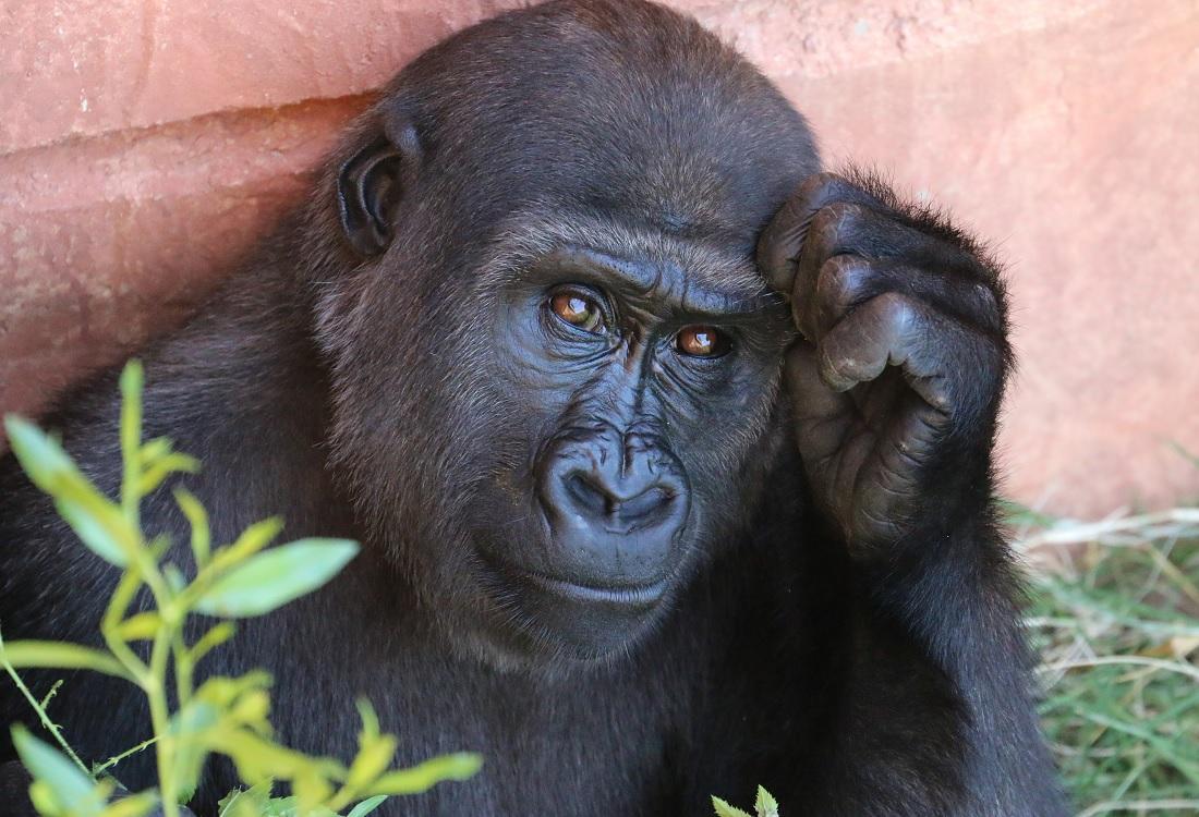 Frans de Waal over emoties bij dieren